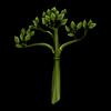 512-strange-celery.png
