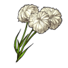 524-cotton-flower.png
