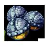 551-mandrake-seed.png
