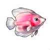 602-pink-angelfish.png