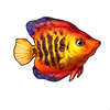 603-striped-angelfish.png
