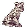 625-white-tiger-cub.png