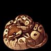 637-normal-ball-python.png