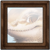 644-forum-vista-bearded-dragon.png
