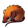 714-brown-spiny-mouse.png