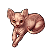 718-pink-sphynx-cat.png