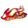 1529-fire-nudibranch.png