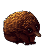 1564-brown-echidna.png