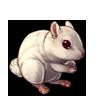 1630-white-chipmunk.png