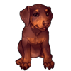 1838-red-doberpup.png