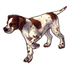 2240-spotted-english-pointer.png