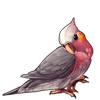 2489-rose-breasted-cockatiel.png