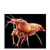 2497-coral-shrimplet.png