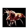 2499-tiger-shrimplet.png