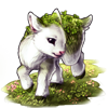 3148-clover-kid-pygmy-goat.png