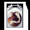 3149-pygmy-goat-box.png