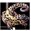 3408-leopard-gecko.png