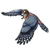 3535-trained-falcon.png