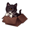 3585-tuxedo-cat-in-the-box.png