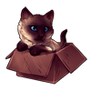 3586-siamese-cat-in-the-box.png