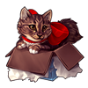 3588-maine-coon-cat-in-the-box.png