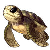 3922-sandy-sea-tortle.png