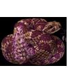 3933-ptilotus-rattler-serpenvine.png