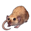 3942-fawn-dumbo-rat.png