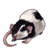 3943-mottled-dumbo-rat.png