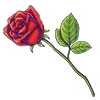 4129-hopeless-romantics-rose.png