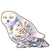 4192-melting-snow-owl.png