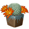 4235-orange-snowball-cactus.png
