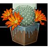 4235-orange-snowball-cactus.png