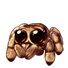4244-tan-jumping-spider.png