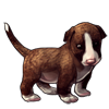 4322-brownie-brindle-bully-pup.png
