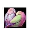 4330-pastel-aurora-lovebirds.png