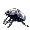 4448-silver-scarab.png