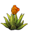 4671-aloe-beara.png