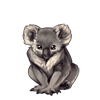 4936-natural-gray-koala.png
