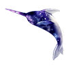 5030-galaxy-narwhal.png