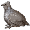 5036-scaled-quail.png