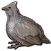 5036-scaled-quail.png