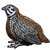 5039-harlequin-quail.png