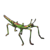 5110-new-growth-phasmid.png