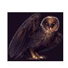5174-melanistic-barn-owl.png