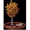 5439-miniature-personal-aspen-grove.png