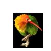 5611-lovebird-kiwi.png