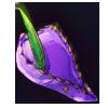 5818-violet-forest-cap.png