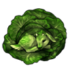 6200-green-cabbage-kid.png
