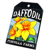 6227-daffodil-seed-packet.png